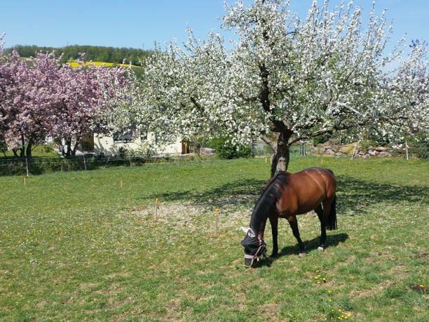 Pferd_zugeschnitten