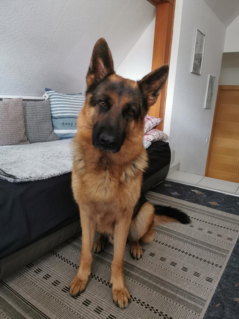 Hund_verkleinert